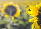 冬季家庭盆花出现病虫害怎么办 ?
