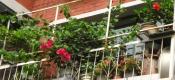 阳台盆花春季的主要管理措施?
