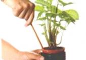 盆土板结严重影响花卉生长,但换土太麻烦了,教你四招轻松搞定