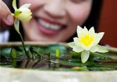 怎样让盆栽睡莲多开花?