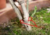 冬天把这7种枝条剪掉,来年你的盆栽才能生长健壮、花开不断!