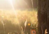 水培郁金香的养殖方法