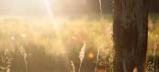瓜叶菊冬季管理要注意哪些问题?