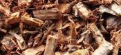 用柳树皮养兰花真是绝了,生根发芽快又多、兰株生长旺盛不烂根