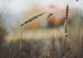 兰花冬季为为何枯黄