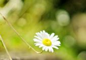 家庭养花需要哪些工具?