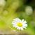 生石花栽培应注意什么?