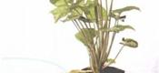 要放年假了盆栽无人浇水怎么办?资深花友是用这四个妙招搞定的